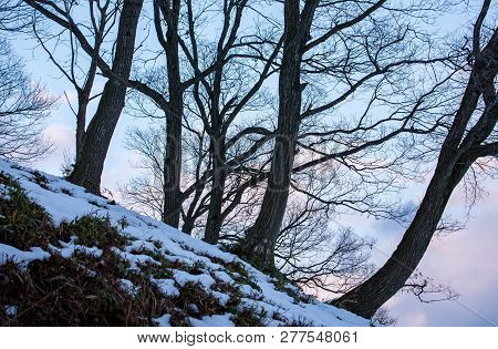 Sloping Snow Covered Hillside With Bare Trees At Sunset