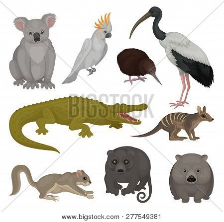 Set Of Wild Australian Animals And Birds. Fauna Theme. Detailed Vector Elements For Poster Of Zoo Or