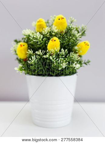 Flower Pot With Green Plant And Little Yellow Chicks On The Table