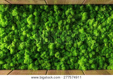 Decorative Moss For Interior Decoration. Design Moss Elements Background Close Up