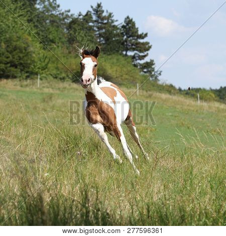 Beautiful Horse Running On Pasturage
