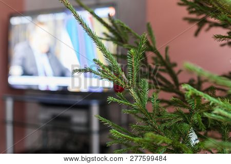 Green Twigs Of Live Christmas Tree And Tv Set On Background At Home Indoor