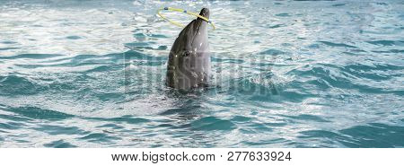Little Dolphin Plying With Circle As Show