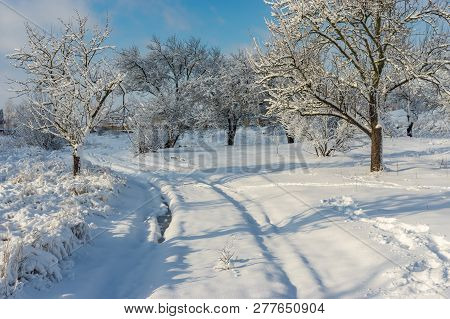 Winter Landscape With Pedestrian Path Through Snow Covered Orchard In Ukrainian Village