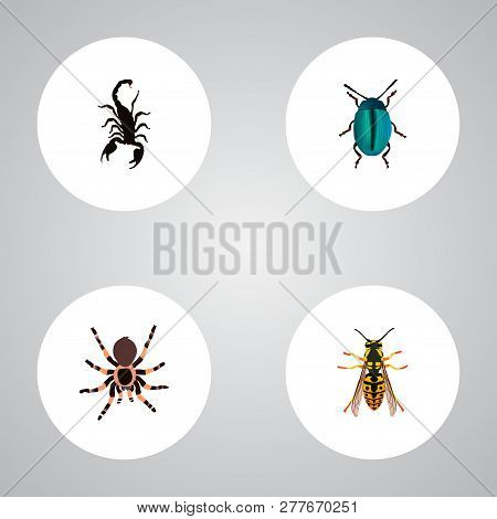 Set Of Insect Realistic Symbols With Scorpion, Sting, Insect And Other Icons For Your Web Mobile App