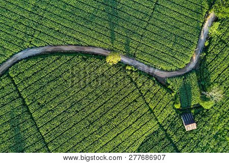 Aerial View Of Beautiful Curve Road And Cottage In Green Corn Field. Abstract Geometric Shapes Of Ag