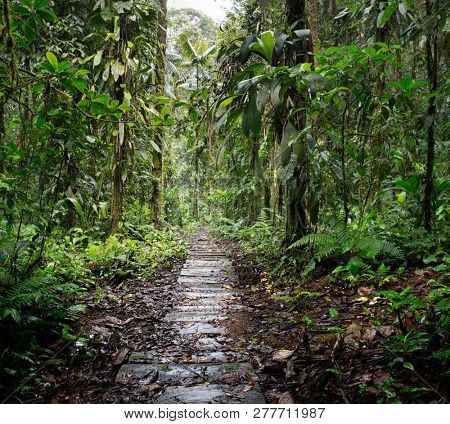 wooden trail in the Amazon rain forest of Colombia. A path through the rainforest between the lush green jungle vegetation. Adventure tourism