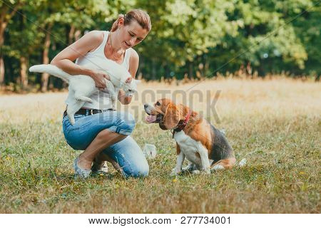 Woman Introducing Her Cat To Dog Outdoors In The Park