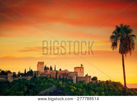 Alhambra Sunset with palm tree in Granada of Spain