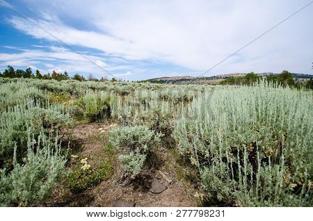High Desert Sagebrush And Creosote Bushes Through A Trail. Taken In Miners Delight Wyoming