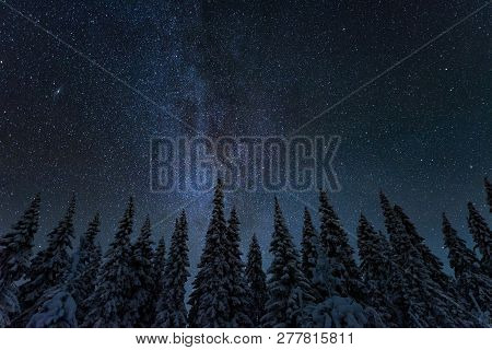 Winter Night Landscape With Trees And Starry Sky