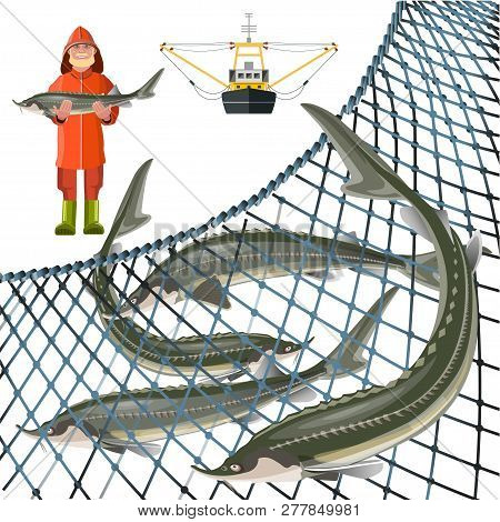 Set Of Sturgeon Fish With Fisher, Marine Nets And Fishing Ship. Vector Illustration Isolated On Whit