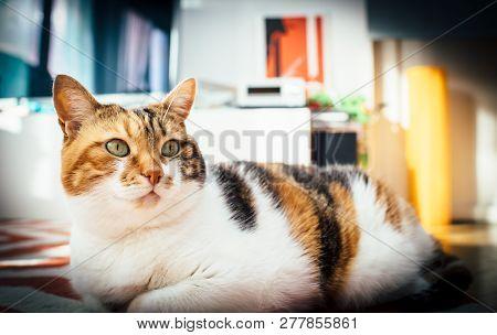 Cute Cat In Cozy Warm Home Environment Having Fun Lying On The Carpet Bathing In Weeknd Sun