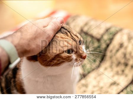 Male hand carresing the lovable fluffy friend cat poster