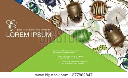 Colorful Insects Concept With Stink Scarab And Colorado Potato Beetles Caterpillars Mosquito In Real