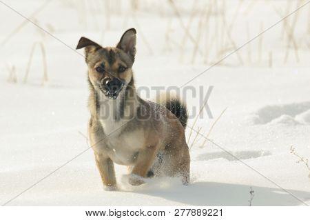 Nature, Fauna, Animals, Dogs, Dog, Puppy, Friend, Curious
