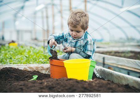 Greenhouse Worker. Small Boy Greenhouse Worker. Greenhouse Worker Planting Flowers. Greenhouse Worke
