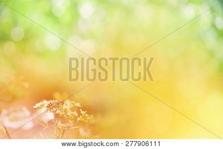 Nature Yellow And Green Background Banner / Abstract Blur Yellow Flower Summer Bright With Insect Be
