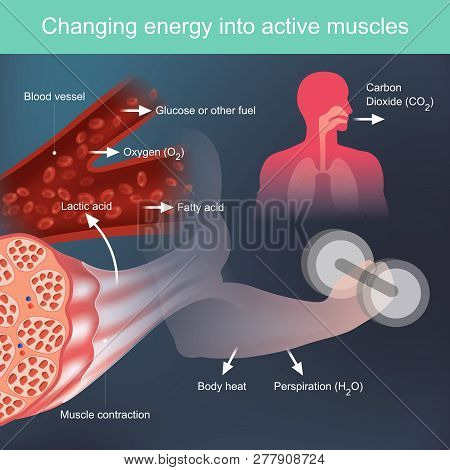 The Body Will Use Nutrients That Provide Energy When Exercising, By Based On Factors From The Blood