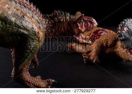 Carnotaurus In Front Of A Triceratops Body On Dark Background