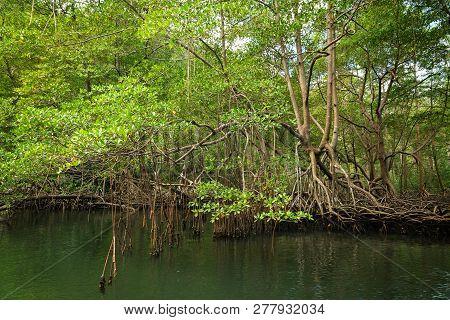 Green Rainforest Nature. Green Rainforest River. Nature. Jungle Forest. Natural Environment. Forest