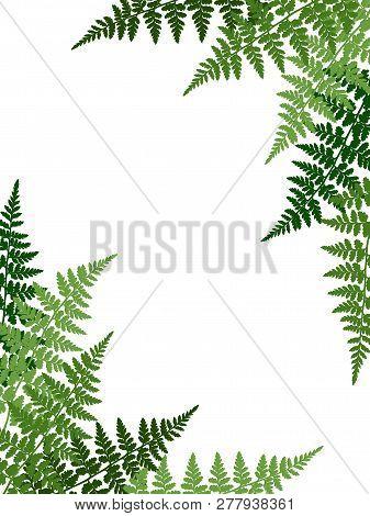 Fern Frond Tropical Leaves Frame Vector Illustration. Bush Plant Leaves Decoration On White Backgrou