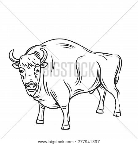 Aurochs Or Bison, Outline Vector. Hand Drawn Horned Animal Illustration For Zoo Design