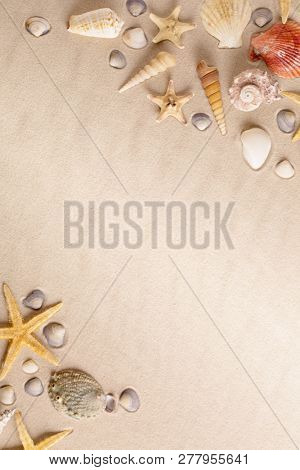Starfish or sea star and cone shells on beach sand. Background with copy space.