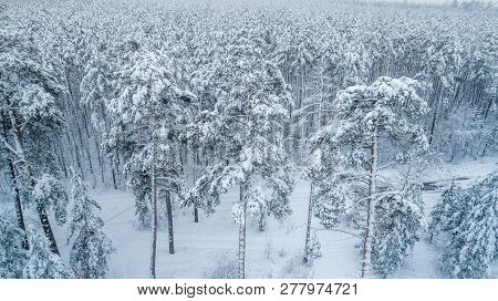 Aerial View Of A Beautiful Winter Snow-covered Forest Covered With Snow-white And Fluffy Snow With P