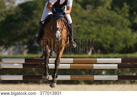 Jockey On Her Horse Leaping Over A Hurdle, Jumping Over Hurdle On Competition