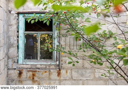 Brick Walls Of Unfinished Houses Overgrown With Plants.