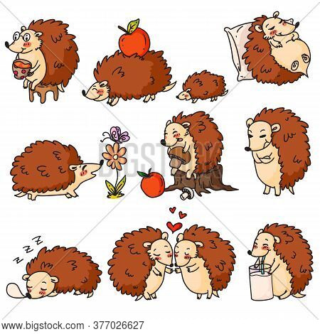 Hedgehog Character. Cartoon Hedgehog Set. Cute Adorable Prickly Forest Animal Character Drinking, Sl