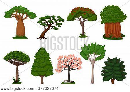 Summer Trees Set. Isolated Dragon, Baobab, Sakura Tree Plant Icon Collection. Vector Exotic Summer N