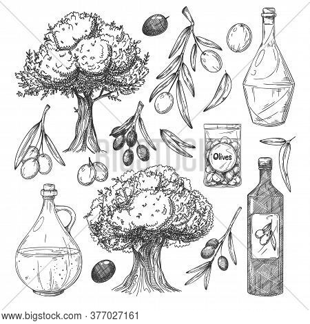 Olive Oil Production Sketches Set. Isolated Flat Olive Tree, Branch, Leaves, Bottles With Oil, Olive