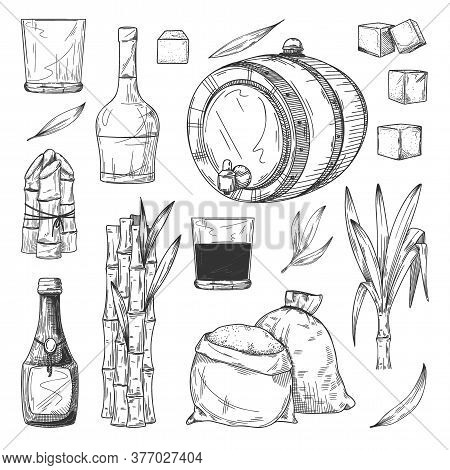 Rum Productiont. Isolated Cane Or Sugarcane With Leaves, Rum Bottle And Glass, Sugar Cubes, Sack, Ba