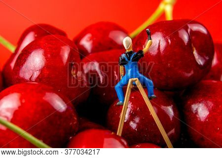 Collection Of Many Cherries In White Ceramic Bowls On Red Background Isolated With Miniature Figurin