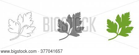Fresh Green Parsley Leaves On White Background. Parsley Isolated. Vector Illustration