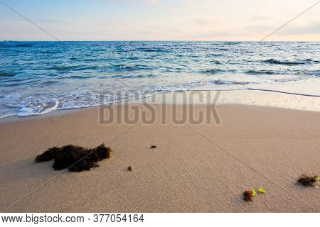 Morning On The Beach. Seaweed On The Sand. Sunny Weather With Some Clouds. Natural Calm Seascape Sce