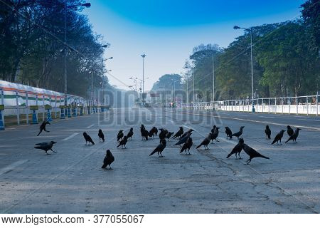 View Of Empty Red Road In The Morning With Blue Sky Above. The Crows Have Gathered Together Due To N