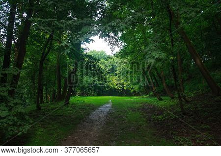City Public Green Park In Summer, Footpath On The Background Of Grass And Trees Lawn, Ukraine, Lviv,