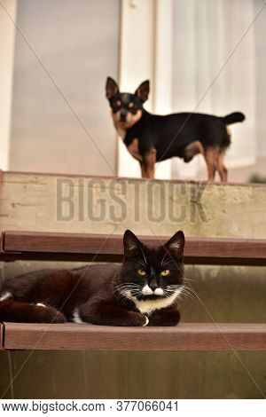 Close Up Portrait Of Dog And Cat. Cat And Dog