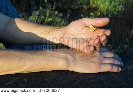 Yellow Butterfly On Woman's Hand. The Setting Sun Illuminates The Butterfly And Hands