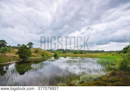 Beautiful Swamp Landscape With Wild Nature In The Wetland In Cloudy Weather