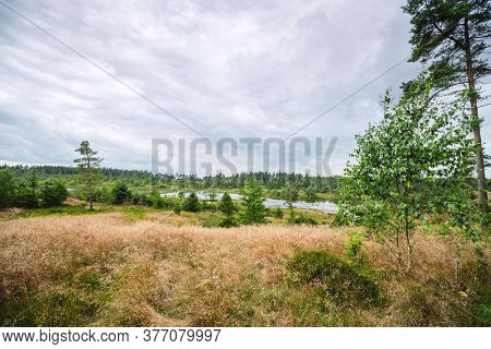 Landscape With A Meadow On Top Of A Wetland With Wilderness And Green Trees