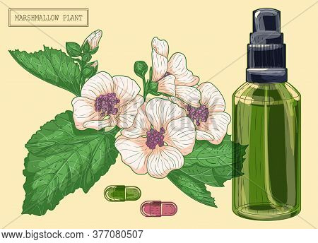 Medicinal Marshmallow Flowers And Green Glass Sprayer, Hand Drawn Botanical Illustration In A Trendy