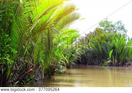 Palm leaves in the delta of Mekong river, Vietnam, Asia