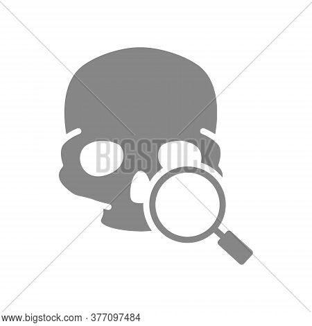 Skull With Magnifying Glass Grey Icon. Cranium Research, Bone Structure Of The Head Symbol