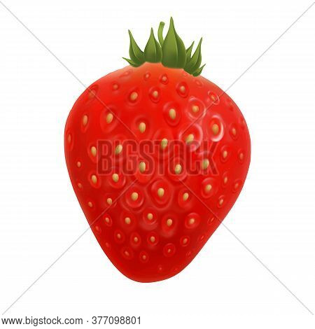 Strawberry Agriculture Farm Delicious Berry Vector. Harvesting Aromatic And Vitamin Ripe Strawberry