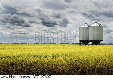 A Pair Of Grain Silos Sit Empty On A Blooming Bright Yellow Canola Field Under A Stormy Sky On The A