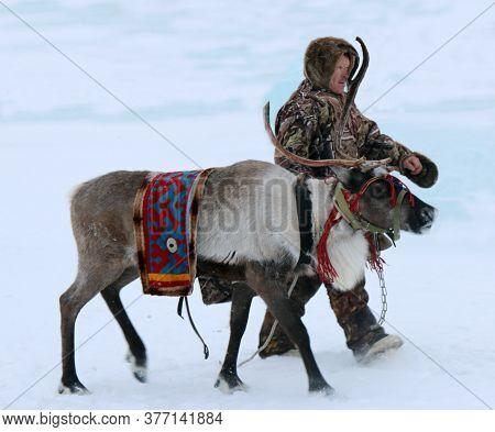 Nefteyugansk, Western Siberia, Russia - March 20, 2019: Khanty Reindeer Breeder And A Reindeer